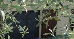 Un mese all'insegna delle olive!