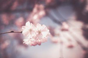 Sento odore di primavera