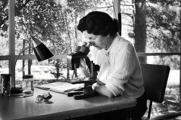 #attiviste – Rachel Carson