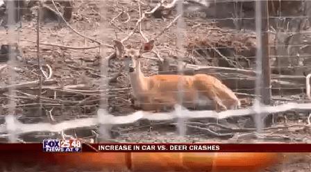Deer-20150814231141_1442292171611.png