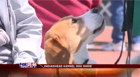 Dog Show-20160415222512_1463370014795.png