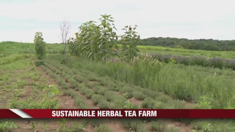 Sustainable_Hebal_Tea_Farm_0_20180730141337