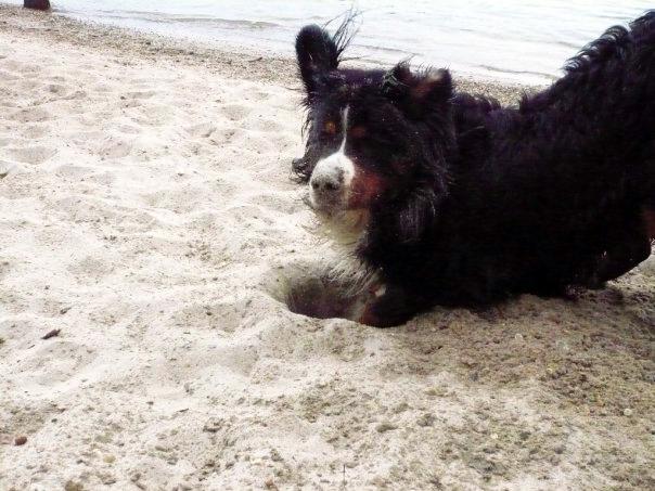 Hundehasser am Werk? In Gimbsheim wurden Giftköder gefunden