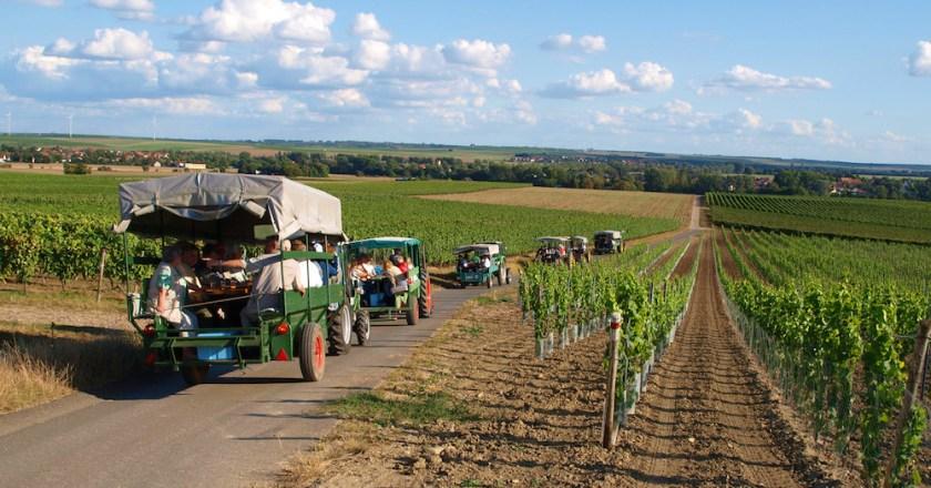 Guter Tropfen in guter Gesellschaft – FWG Mommenheim lädt zur traditionellen Weinbergsrundfahrt