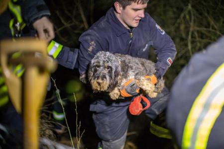Tierischer Einsatz der Feuerwehr Mainz und Rettung aus einer Grube