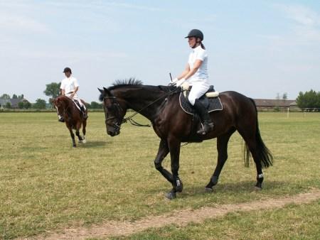 """Im """"Mainzer Sand"""" stürzte ein Reiter vom Pferd. (Symbolbild: stock:xchng)"""