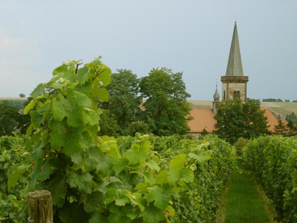 Unser heutiges Rheinhessen-Wisser-Quiz dreht sich um das Weinanbaugebiet 1