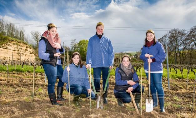 Neue Weinmajestäten für Rheinhessen gesucht
