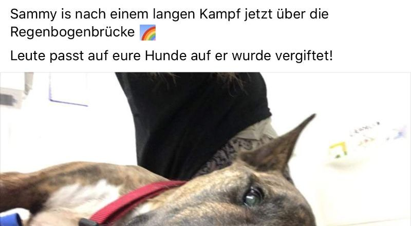 Hund in Saulheim vergiftet