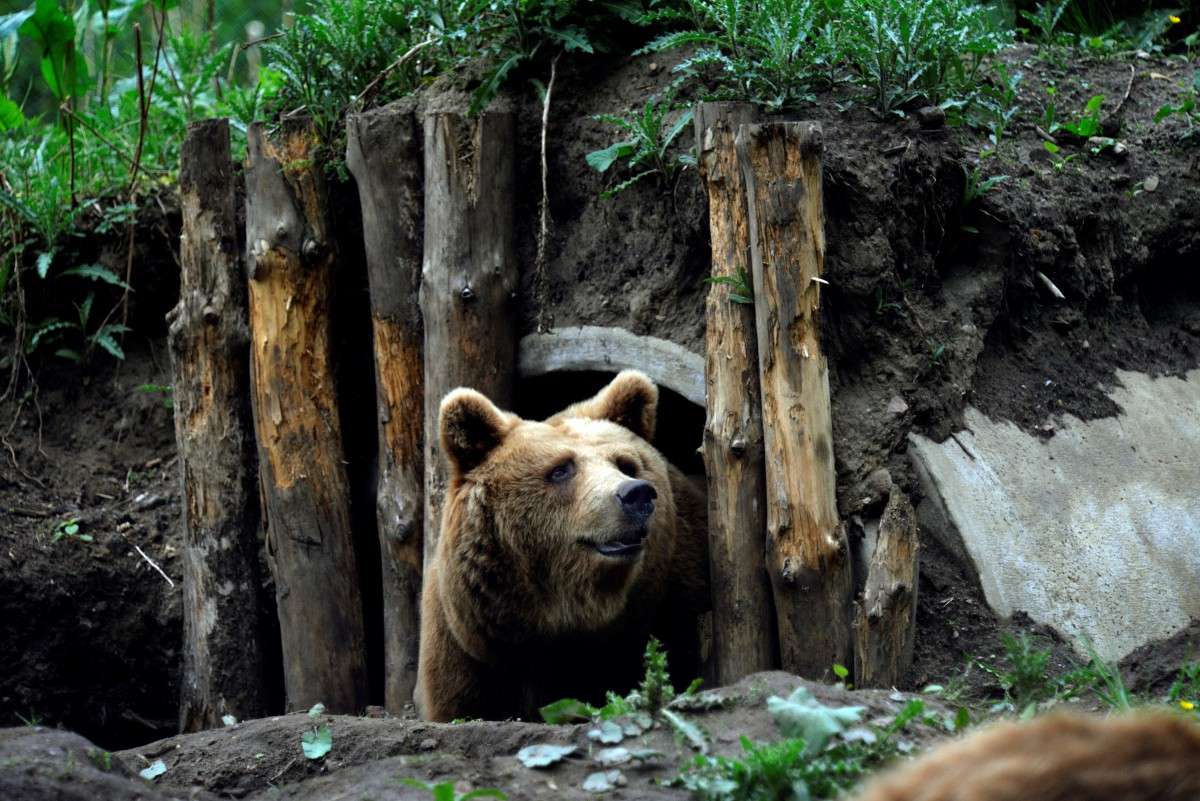 BROWN BEARS RESCUE IN GERMANY