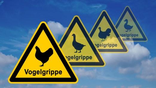 ib1 InfoBanner - Vogelgrippe Warnsymbol ohne Viren 16zu9 g2634