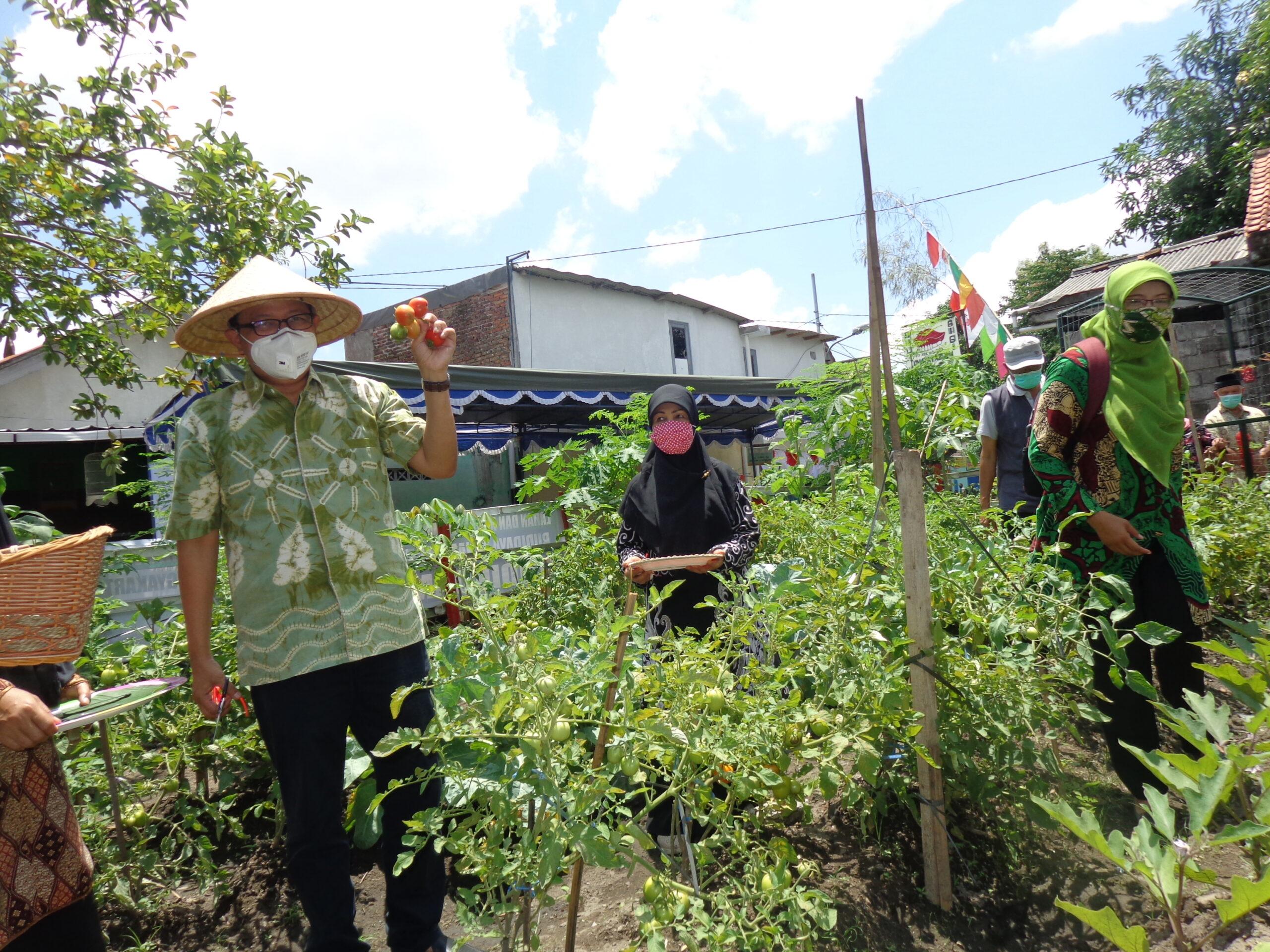 Kampung Sayur Hidupkan Budaya Guyub Rukun