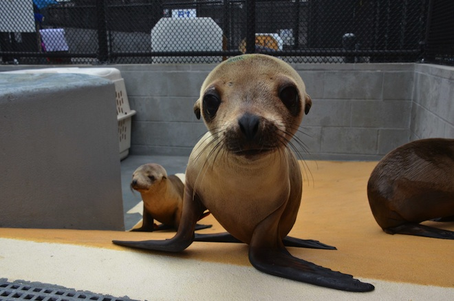 sea lion cubs