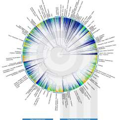Human Evolution Tree Diagram Wiring Toggle Switch 14 World Changing Data Visualizations From The Last 4