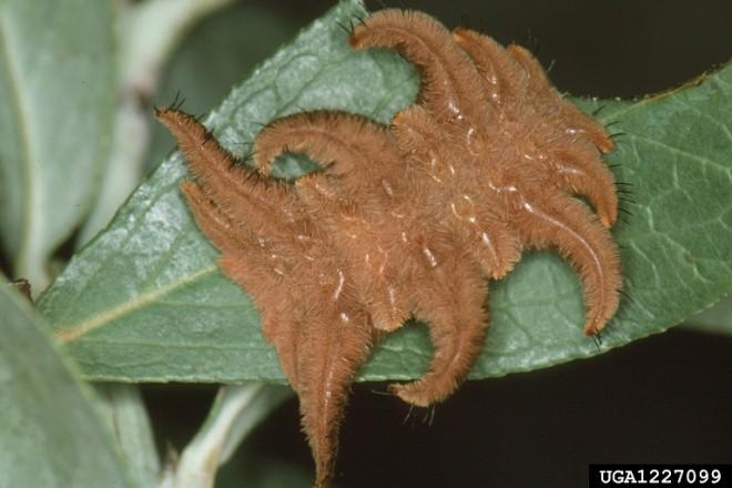 Fuzzy Wooly Bear Caterpillar