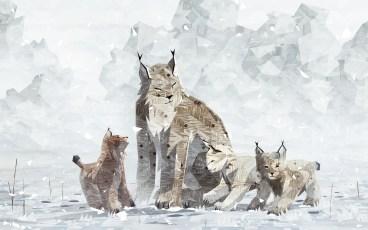 shelter2-lynx