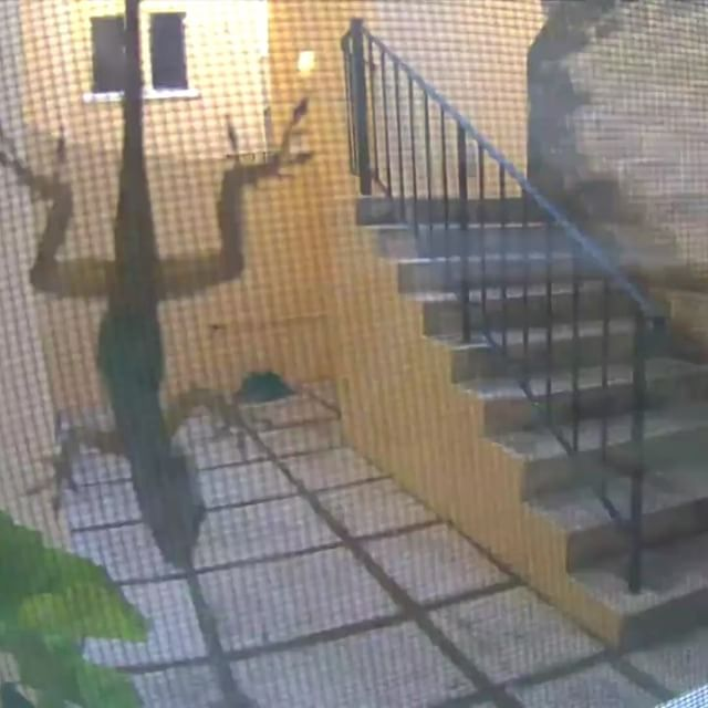 When your security camera goes off early on a Sunday and you wonder who is at the front door!
