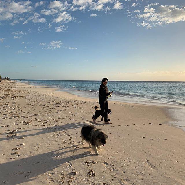 Merry Christmas walk on Elbow Beach.