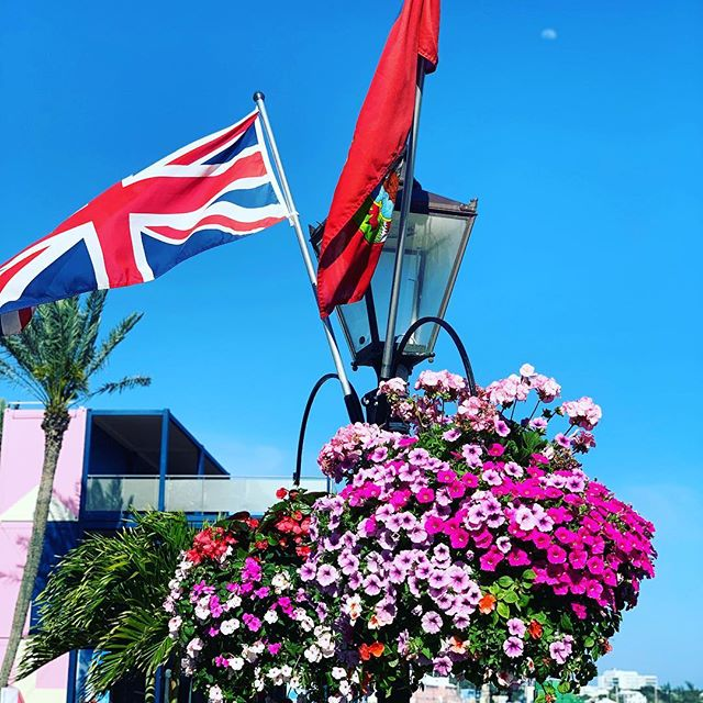Beautiful flowers and the UK  flag seen on today's walk through town. A little slow today with a sore back. Sneezing is dangerous over 50!