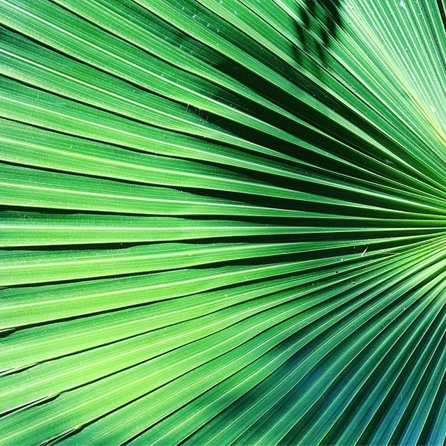 Just a reminder that Palm Sunday was yesterday.