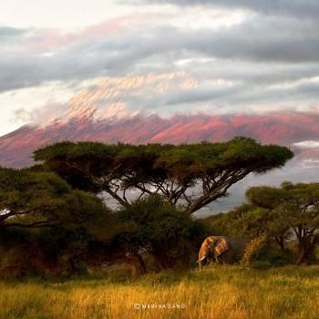 Kilimanjaro de fondo. Foto: Marina Cano