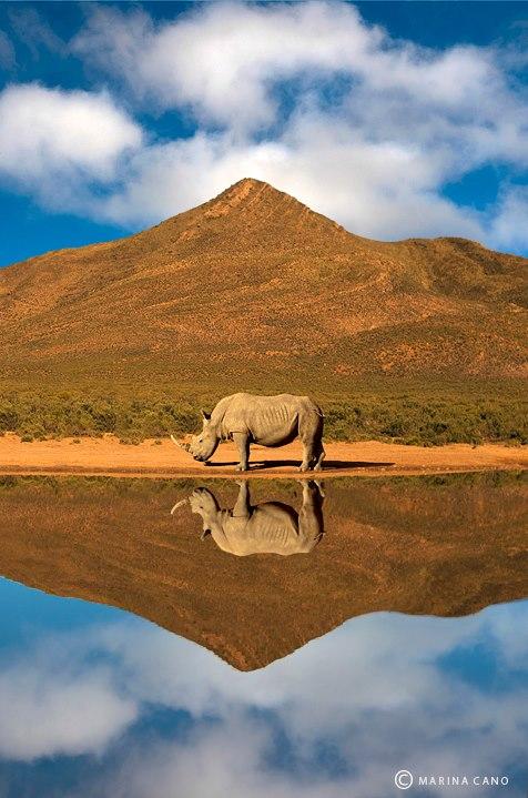 Rinoceronte - Kenya. Foto: Marina Cano