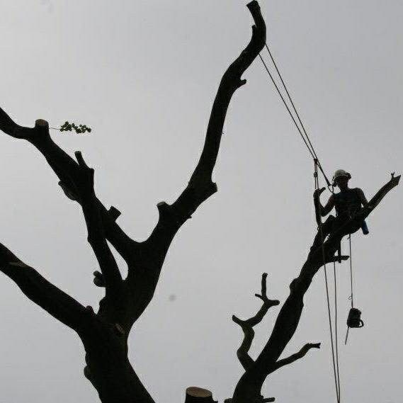 Wirral Tree Surgeon 1