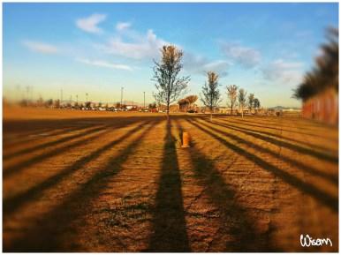 Lines at Dawn