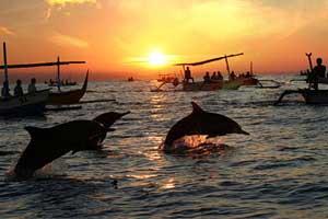 Lumba -Lumba di Pantai Lovina Singaraja Bali