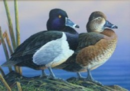 2015 WI Duck Stamp - Doughty