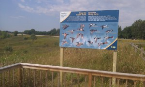 Duck ID panels at Abrams Project viewing platform...