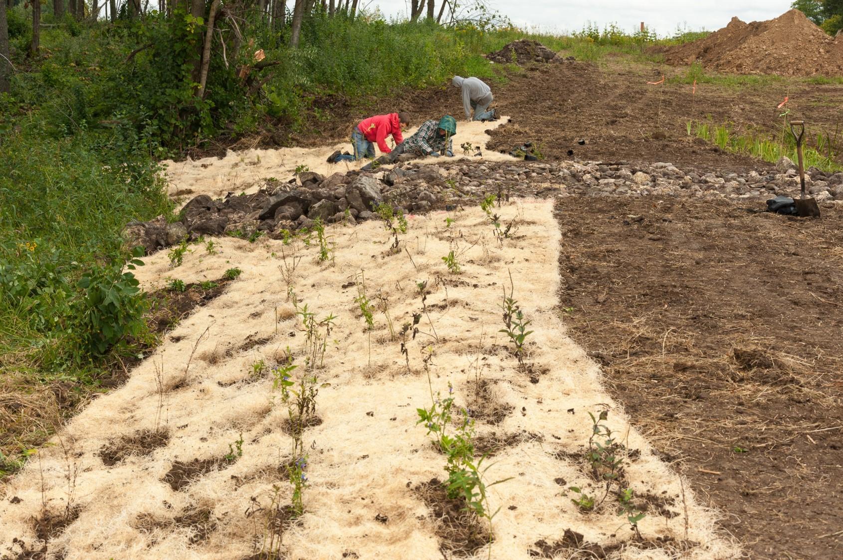 Replanting native vegetative cover