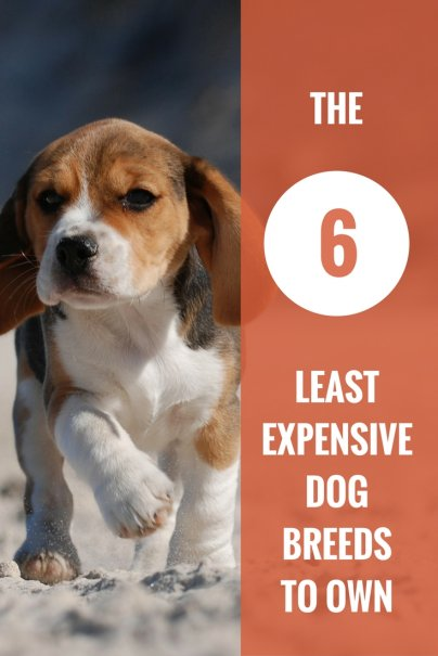 The 6 Least Expensive Dog Breeds To Own