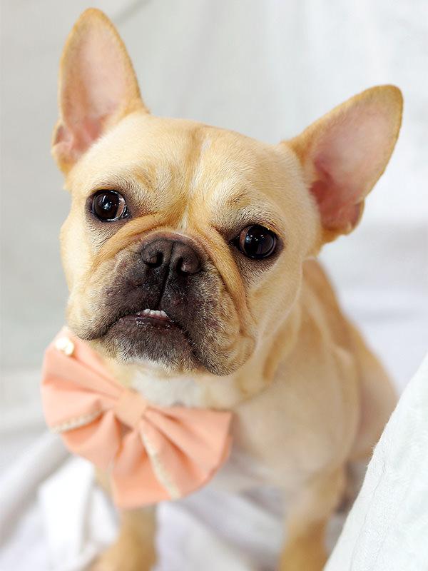 人気犬種 トリミング・シャンプー 料金(税別) フレンチ・ブルドッグ