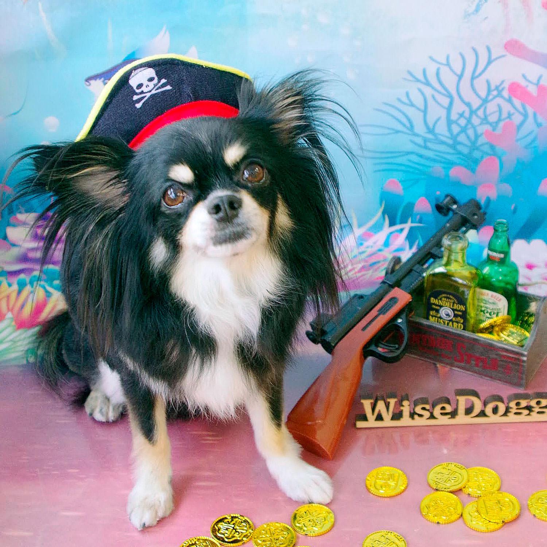 パイレーツ オブ ドッグ!気分は船長♪みんなで海に出航だー!