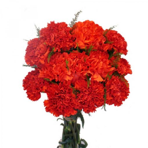 Amber – 15 Red Carnations