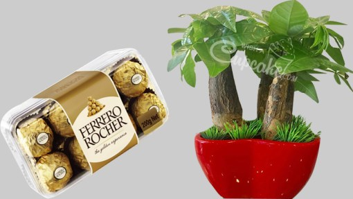 WACC SPECIAL Money tree 3 in1 with Red Heart Shape Pot