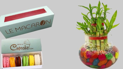 WACC SPECIAL Lucky Bamboo 2 Layer With Glass Matki