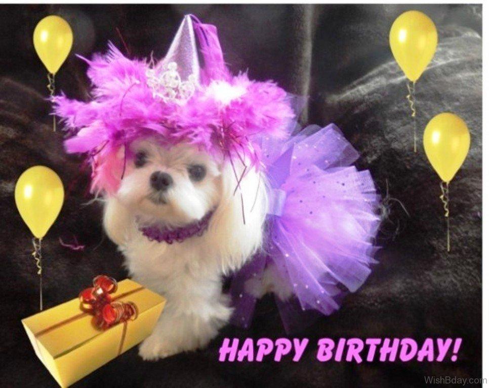 Happy Birthday Wishes Dogs