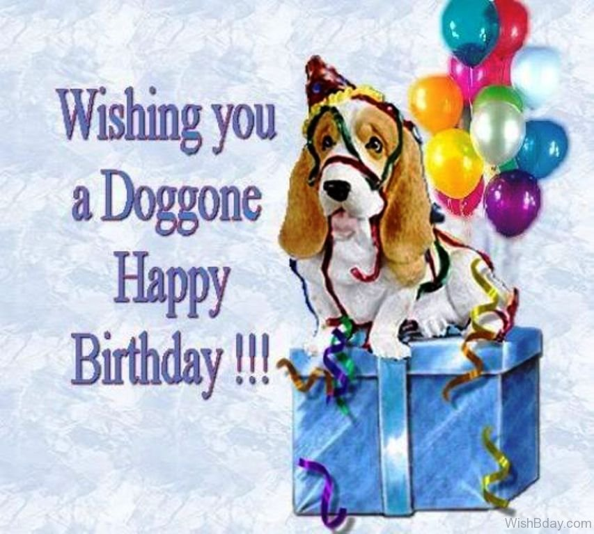 64 Dog Birthday Wishes