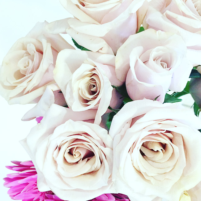 pink roses, pink flowers