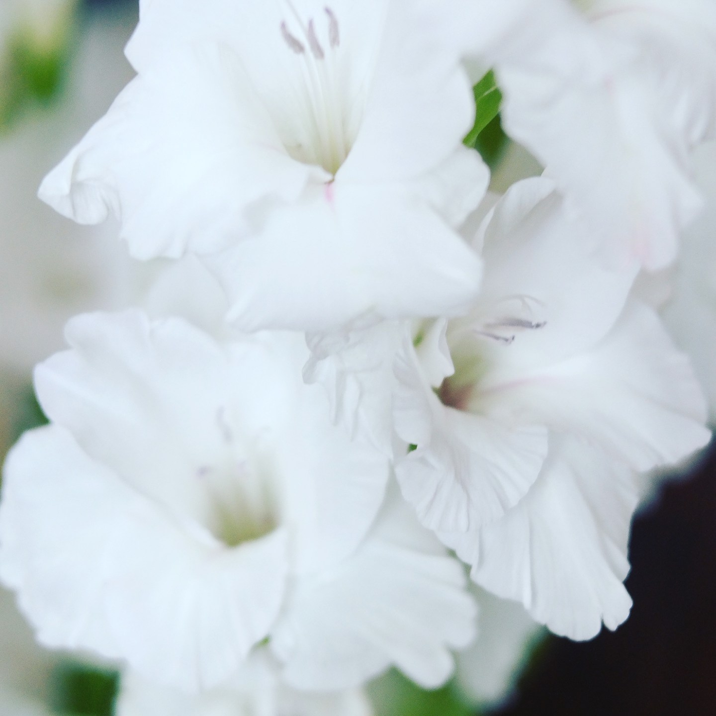 white-flowers-wishes-and-reality