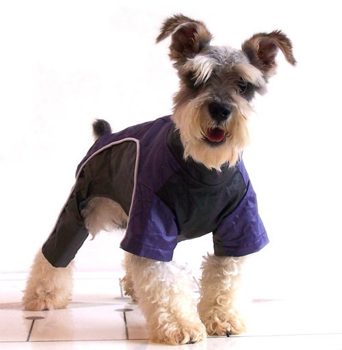 How to Buy Your Lovely Dog Charming and Healthy Clothes