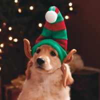 Get Christmas Clothing Ready for Dog | WishForPets