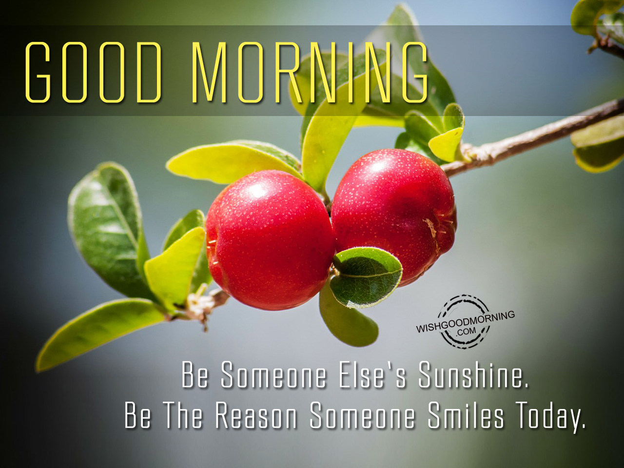 good morning wishes good