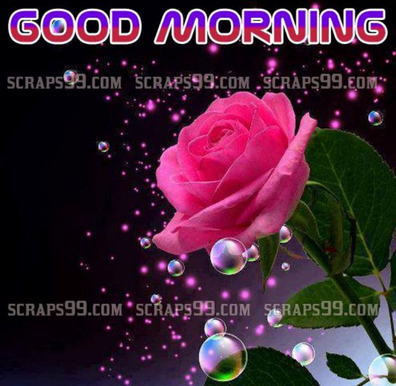 image of rose good