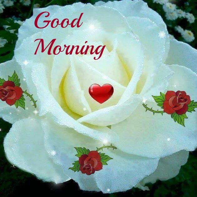 good morning wishes with