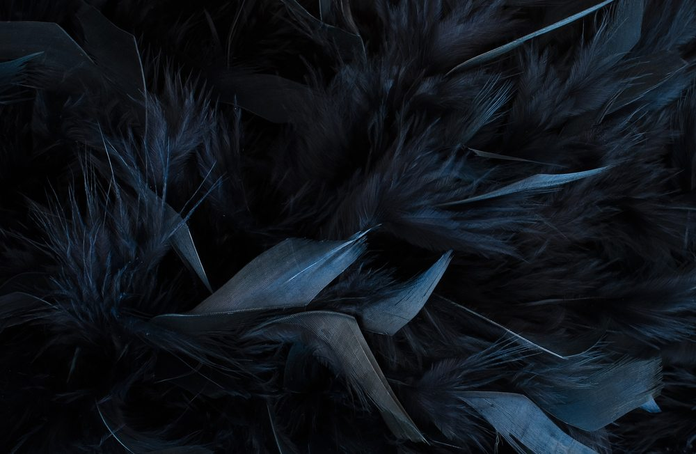 Falling Feathers Wallpaper What Do Black Feathers Mean Wishing Moon
