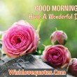 Good Day Wishes