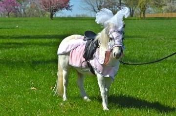 Wishpony Pony Barding